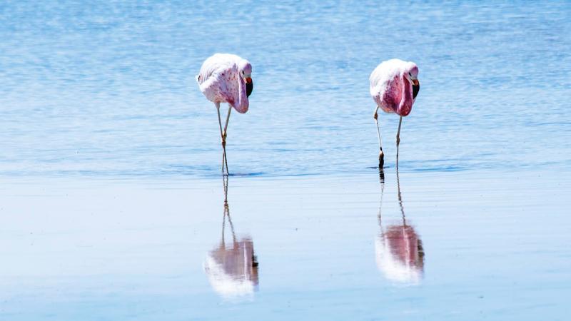 San Pedro de Atacama - všechny krásy Jižní Ameriky na jednom místě