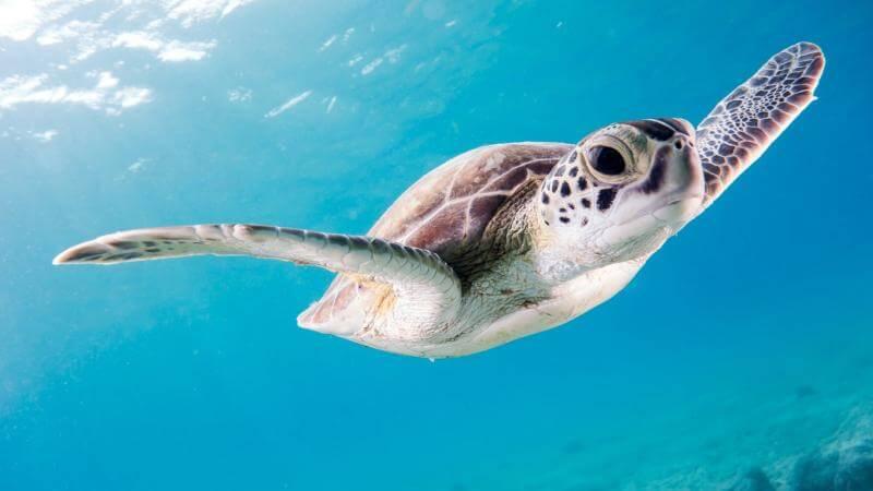 O mořských želvách, plastovém odpadu a projektu Tamar v Ubatubě