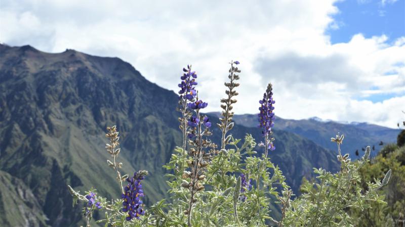 Kaňon Colca - 3denní túra nejkrásnějším kaňonem na světě