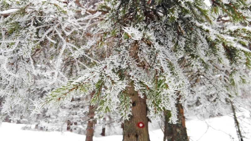 Sněhový výšlap na Snežnik a jak se to nedělá